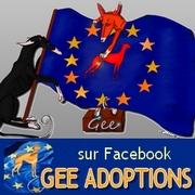 180-galgos-ethique-europe-GEE-adoptions-facebook
