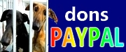 180-paypal-galgos-ethique-europe-180x75
