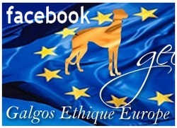gee-galgos-ethique-europe-facebook
