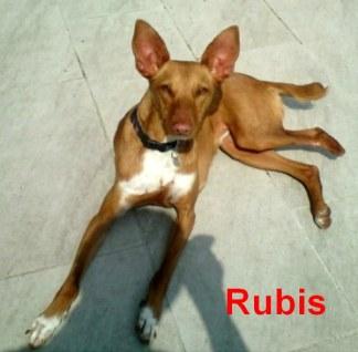 ibi-rubis