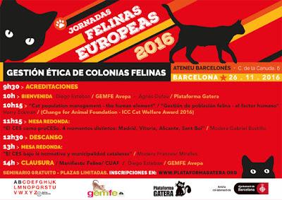 jfe-2016-programa-26-nov-plateforme-feline