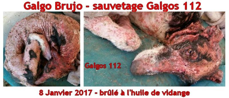 brujo-900-sauvetage-galgos-112-appel-galgos-ethique-europe-janvier-2017