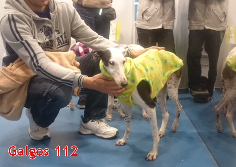 harmony-1-galgos-112-appel-galgos-ethique-europe