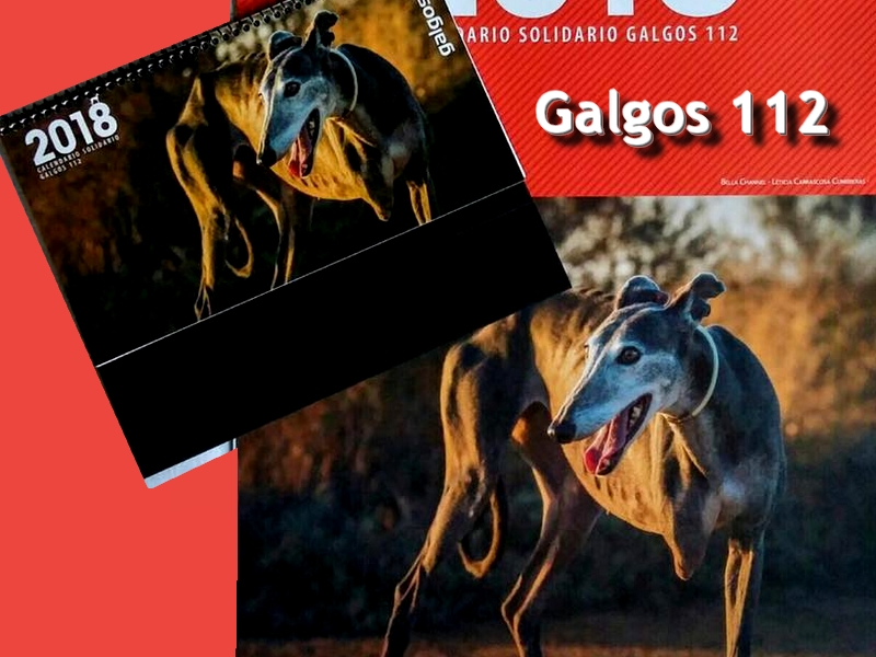 galgos-ethique-europe-calendrier-galgos112-2018-800x600